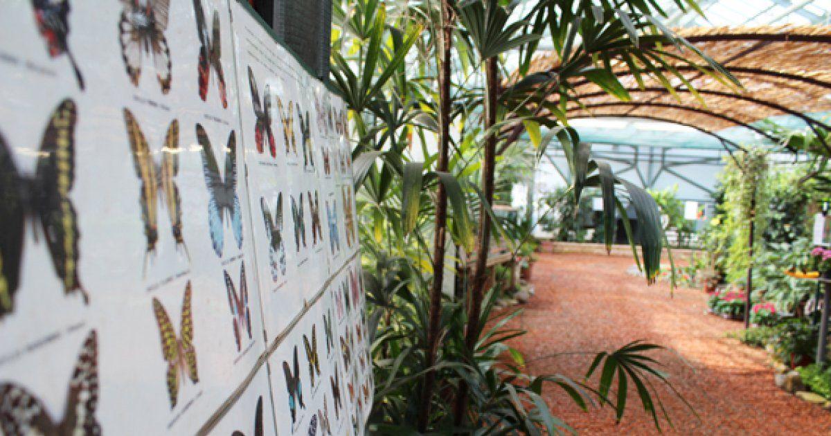 le jardin d 39 eden des papillons hunawihr id e sortie jardin des papillons. Black Bedroom Furniture Sets. Home Design Ideas