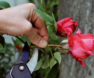 Le jardinage d'avant Printemps