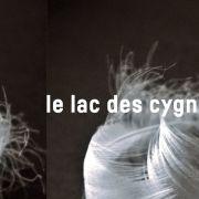 Le Lac des cygnes (El Meddeb)