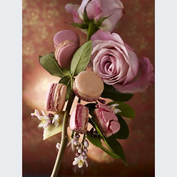Les macarons de pierre herm wittenheim guide de l 39 alsace - Pierre herme boutique en ligne ...