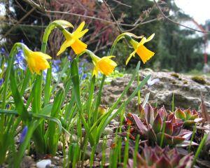 Le mois de mars dans votre jardin