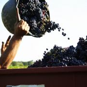 Neïa Siessa : le vin bourru alsacien