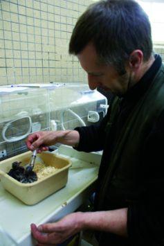 Le nourrissage du touraco de fischer par Jean-François Lefevre, chef animalier