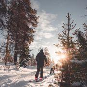 Le ski nordique : un sport d'hiver en plein essor