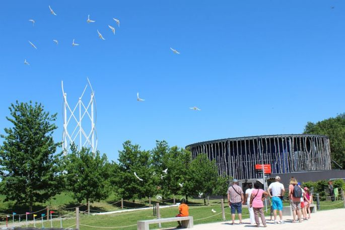 Le spectacle des pigeons
