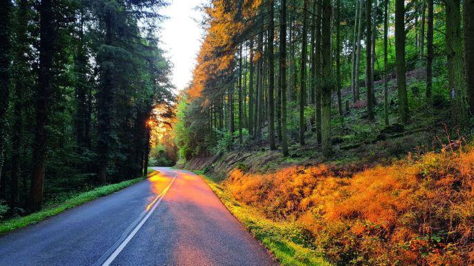 Le trail du haut-Koenigsbourg®