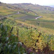 Forces économiques de l\'Alsace au Moyen Age