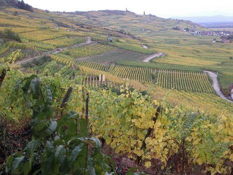 Le vignoble alsacien a été un des piliers de son économie au Moyen Age