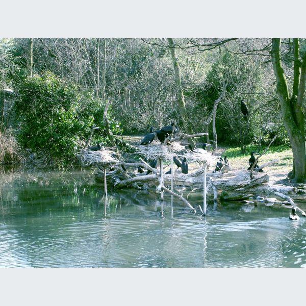 Le Zoo De Bale
