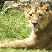 Le Zoo de Mulhouse fête ses 150 ans en 2018