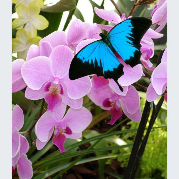 Expo-vente d\'orchidées - Hunawihr - Manifestation - Jardin des Papillons