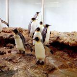 Zoo de Bâle