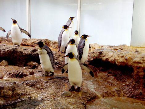 Les pinguins du zoo de Bâle