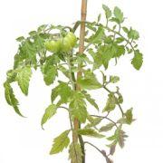 Plantes et fleurs : trois plantes faciles à cultiver