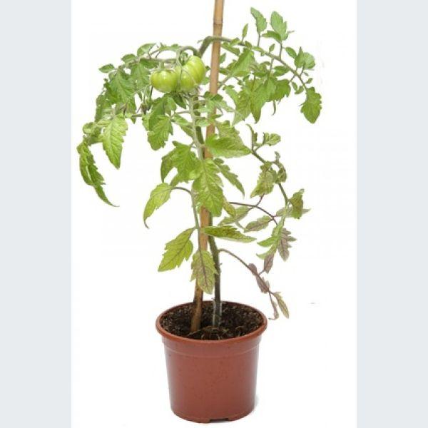 Plantes et fleurs trois plantes faciles cultiver for Plantes decoratives exterieur