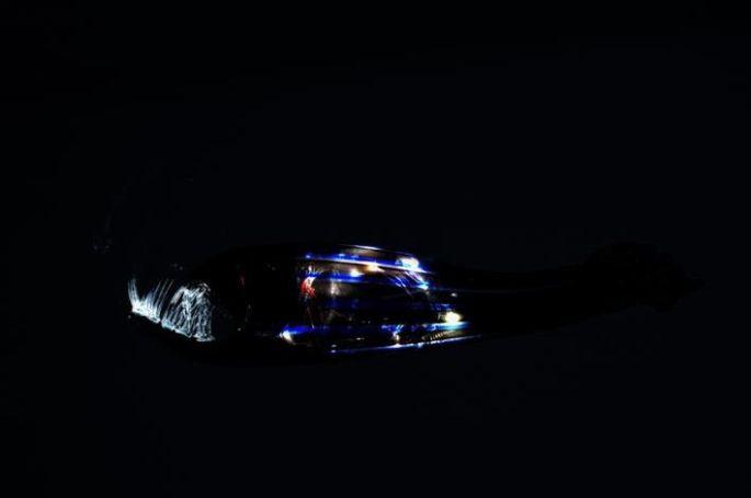 Yves Chaudouët, Les poissons des grandes profondeurs ont pied, verre soufflé / étiré, grappe LED, 2006