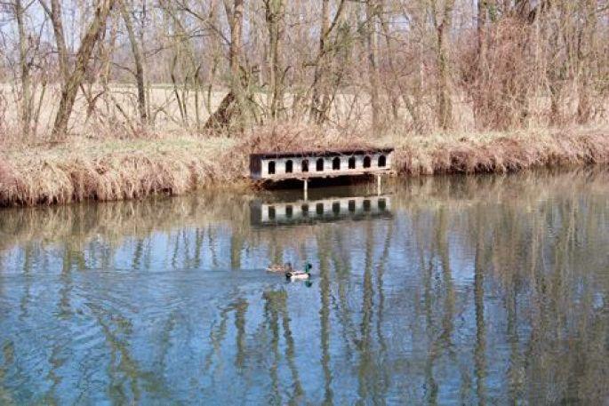 Les canards sur le canal