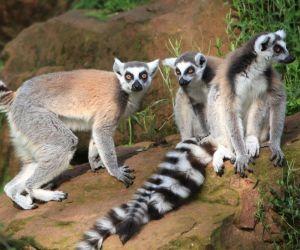 Madagascar en fête