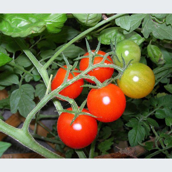 Mai dans votre jardin potager semance arrosage for Arrosage jardin potager
