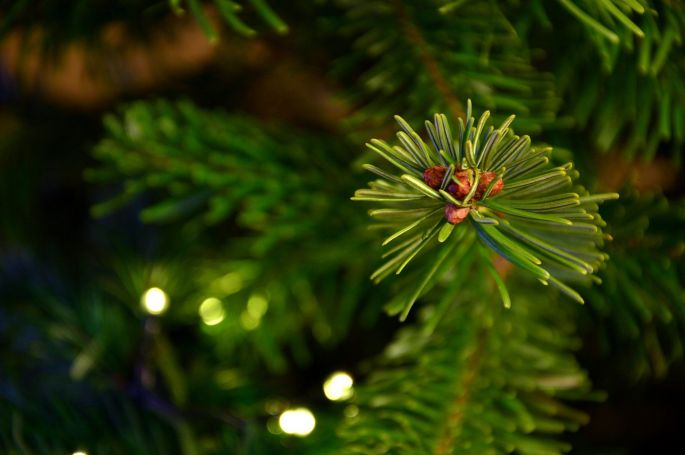 Le sapin de Noël naturel, à trouver sur la Place Rapp à Colmar