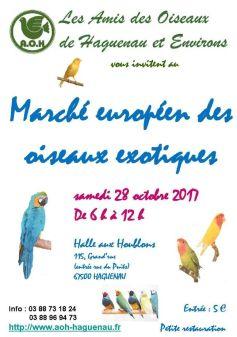 Marché d\'automne d\'oiseaux exotiques à Haguenau 2017