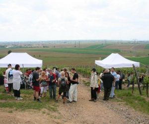 Marche gourmande du Sonnenberg 2020