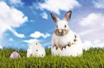 À Pâques, les lapins et les œufs en chocolat sont les rois!