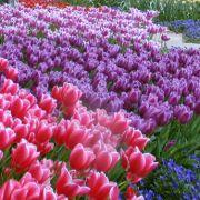 Fleurs : Les essences du printemps
