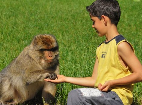 Les macaques de la Montagne des Singes sont particulièrement sociables