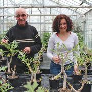 Mulhouse : le conservatoire botanique sauve la flore en danger