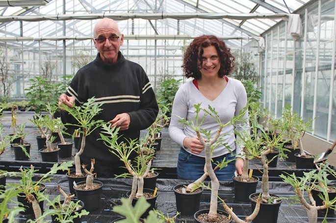 Mathieu Hildebrand et Muriel Litzer font germer et pousser des plantes, qui comptent parmi les plus menacées, en dehors de leur milieu naturel: un travail de pionnier reconnu dans les autres conservatoires botaniques de France
