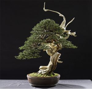 Parmi les temps forts, Folie\'Flore, le show floral des Journées d\'octobre, sera consacré aux bonsaïs