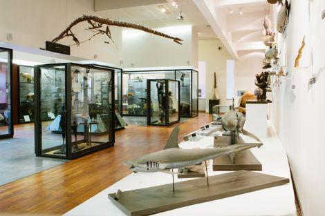La galerie de zoologie du MAN