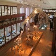 Muséum d\'histoire naturelle de Nantes