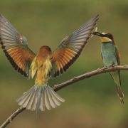 Nature libre et sauvage