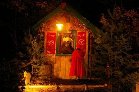Le séquoia de Noël à Lutzelhouse