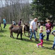 Noël du Hirtz 2018 : Balade avec les ânes