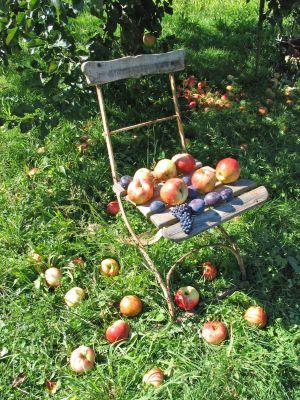 Octobre dans votre jardin
