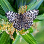 Tous les papillons du monde... au Jardin des Papillons - Saison 2008