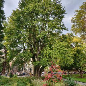 Le parc Steinbach en plein centre de Mulhouse