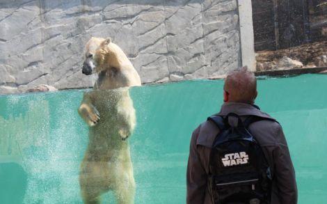 Une vue parfaite sur le bassin des ours polaires dans l\'Espace Grand Nord