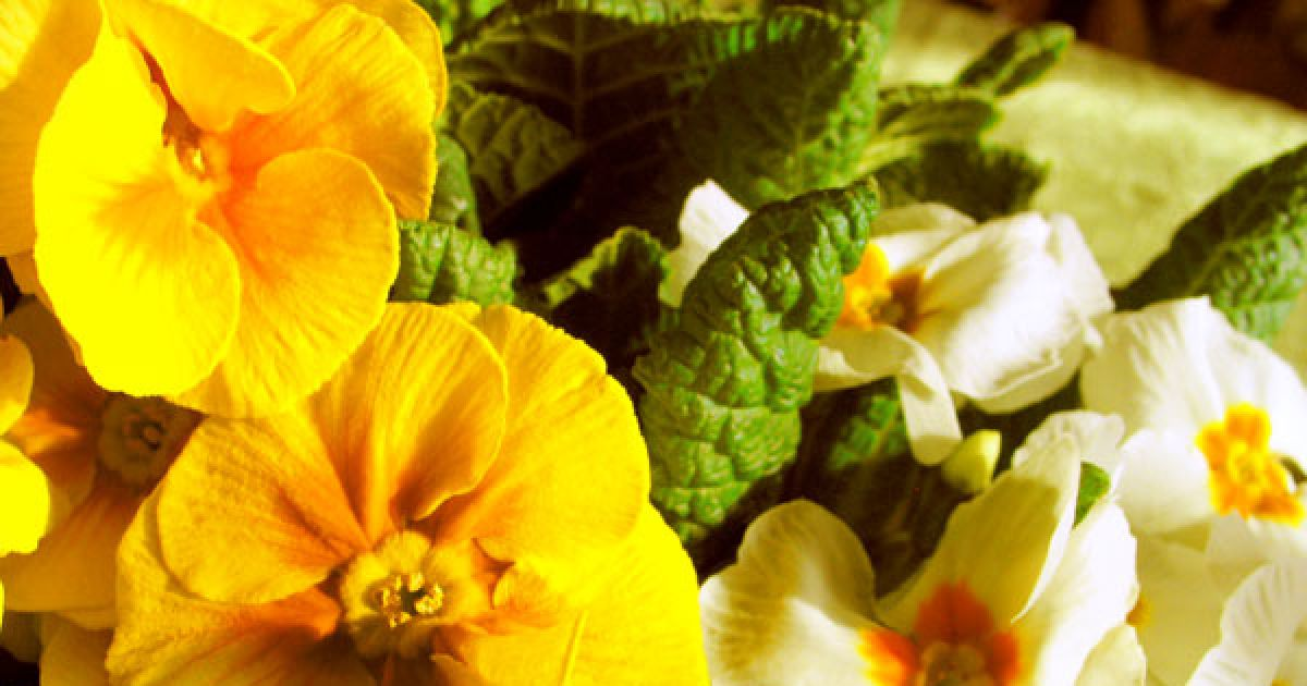 Jardin les plantations du printemps mulhouse colmar haut rhin 68 - Terrasse et jardin haut rhin mulhouse ...