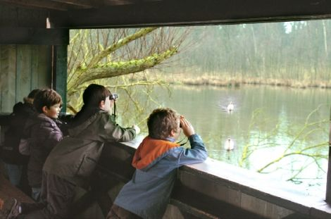 Petite camargue alsacienne : des observatoires pour découvrir la nature en toute discrétion