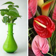 Plantes et Fleurs : Des plantes d\'intérieur contre la pollution