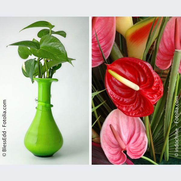 plantes et fleurs des plantes d 39 int rieur contre la pollution mulhouse colmar haut rhin 68. Black Bedroom Furniture Sets. Home Design Ideas