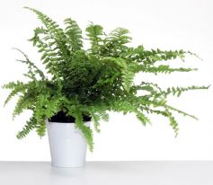 Plantes et fleurs : quelques championnes de la dépollution