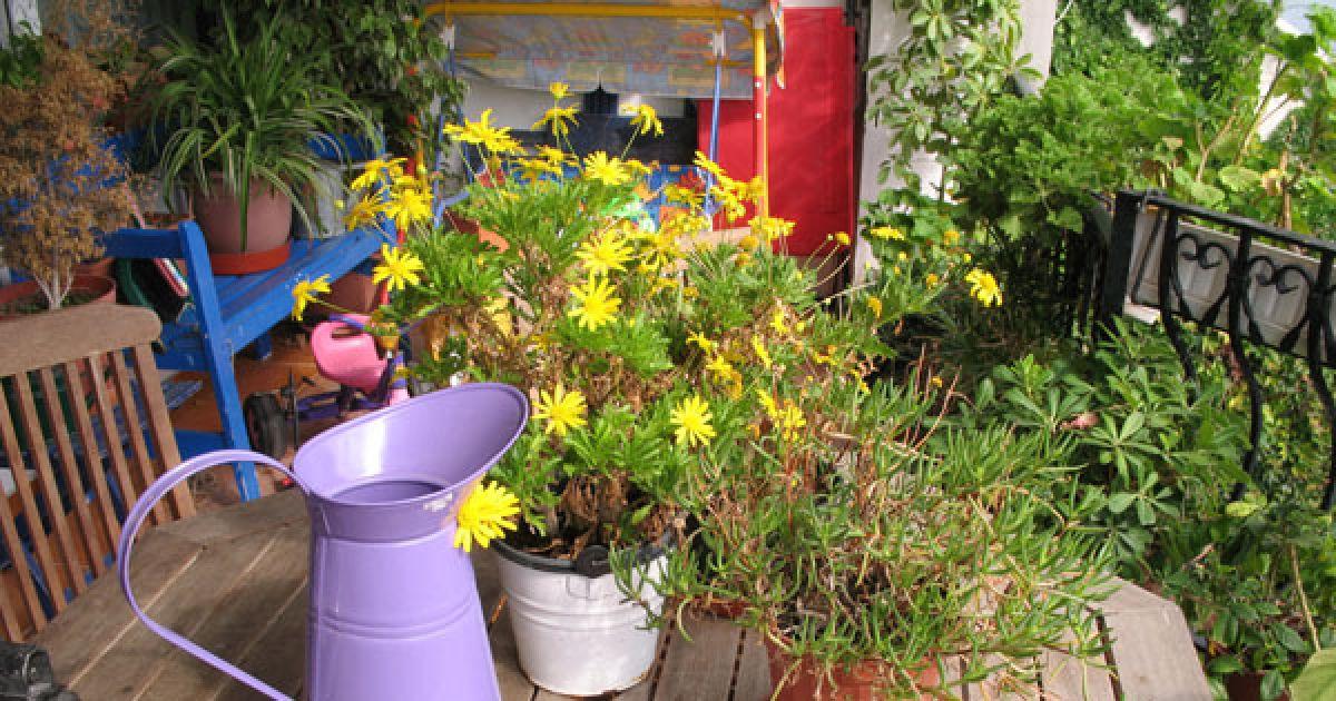 plantes et fleurs sur mon balcon ou ma terrasse. Black Bedroom Furniture Sets. Home Design Ideas