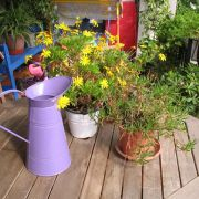 Fleurs : des fleurs sur mon balcon ou ma terrasse
