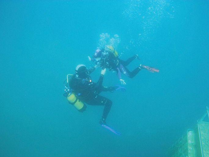 Le Club de plongée des trois frontières organise des sorties en milieu naturel, comme à la gravière du Fort près de Strasbourg