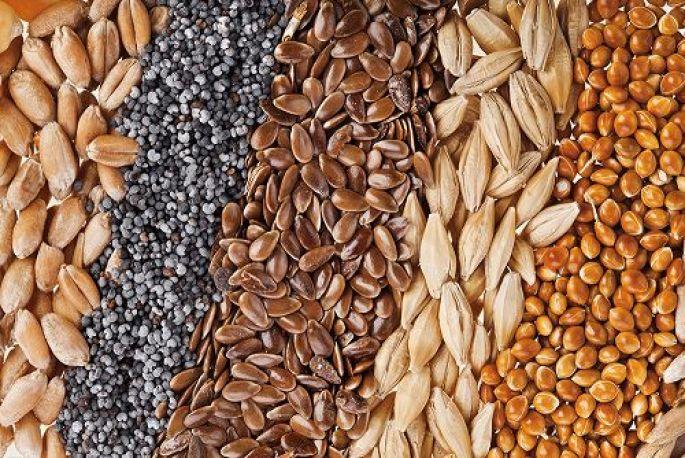 Les graines, un allié de poids !